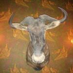 En GNU